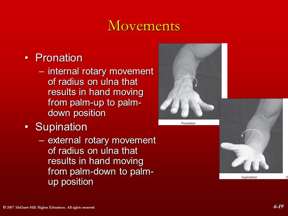 © 2007 McGraw-Hill Higher Education. All rights reserved. 6-19 Movements PronationPronation –internal rotary movement of radius on ulna that results i