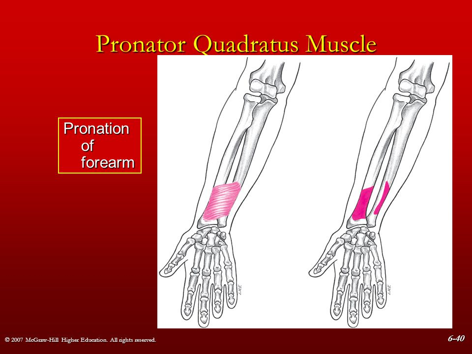 © 2007 McGraw-Hill Higher Education. All rights reserved. 6-40 Pronator Quadratus Muscle Pronation of forearm