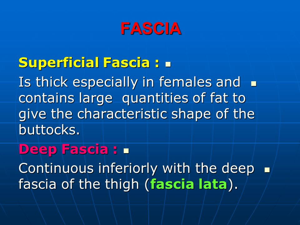 FASCIA Superficial Fascia : Superficial Fascia : Is thick especially in females and contains large quantities of fat to give the characteristic shape