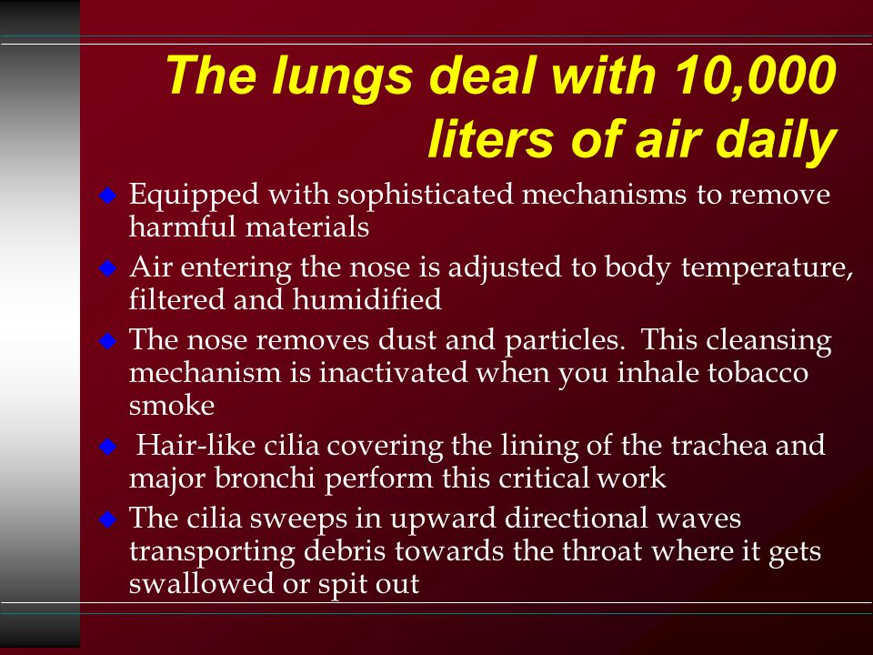 The lungs deal with 10,000 liters of air daily u Equipped with sophisticated mechanisms to remove harmful materials u Air entering the nose is adjusted to body temperature, filtered and humidified u The nose removes dust and particles.