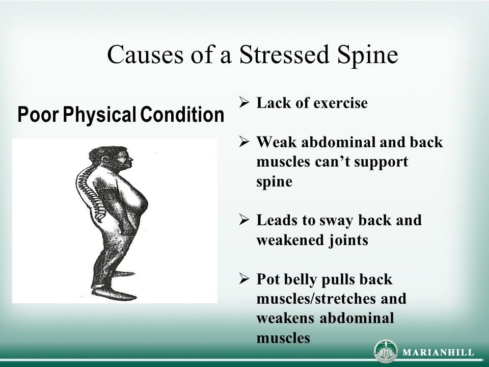 Causes of a Stressed Spine  Lack of exercise  Weak abdominal and back muscles can't support spine  Leads to sway back and weakened joints  Pot belly pulls back muscles/stretches and weakens abdominal muscles Poor Physical Condition