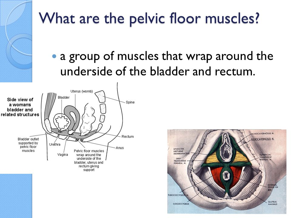 Levatorani divided into three parts: iliococcygeus muscle Pubococcygeus muscle (pc muscle) Puborectalis muscle It supports the viscera in pelvic cavity, and surrounds the various structures that pass through it.