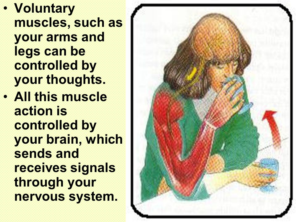 Voluntary muscles, such as your arms and legs can be controlled by your thoughts. All this muscle action is controlled by your brain, which sends and