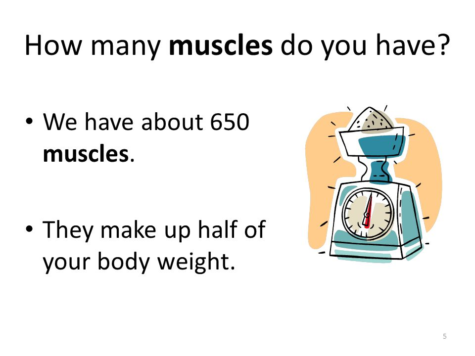 What is the muscular system? The muscular system is all of the muscles in our body that help us move. 4 www.123rf.com