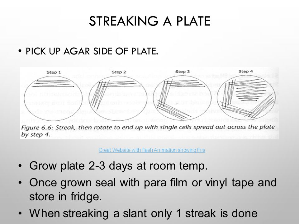 STREAKING A PLATE PICK UP AGAR SIDE OF PLATE. Grow plate 2-3 days at room temp. Once grown seal with para film or vinyl tape and store in fridge. When