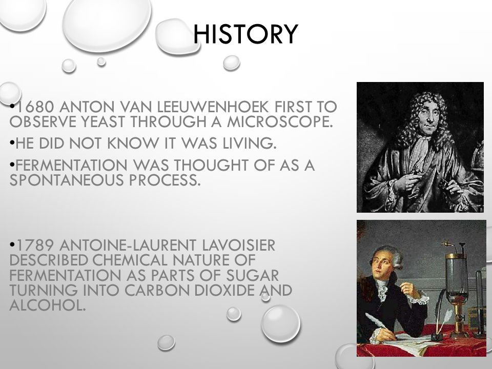 HISTORY 1680 ANTON VAN LEEUWENHOEK FIRST TO OBSERVE YEAST THROUGH A MICROSCOPE. HE DID NOT KNOW IT WAS LIVING. FERMENTATION WAS THOUGHT OF AS A SPONTA