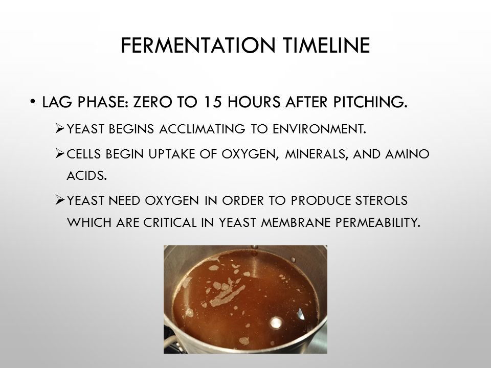 FERMENTATION TIMELINE EXPONENTIAL GROWTH PHASE: 4 HOURS TO 4 DAYS.