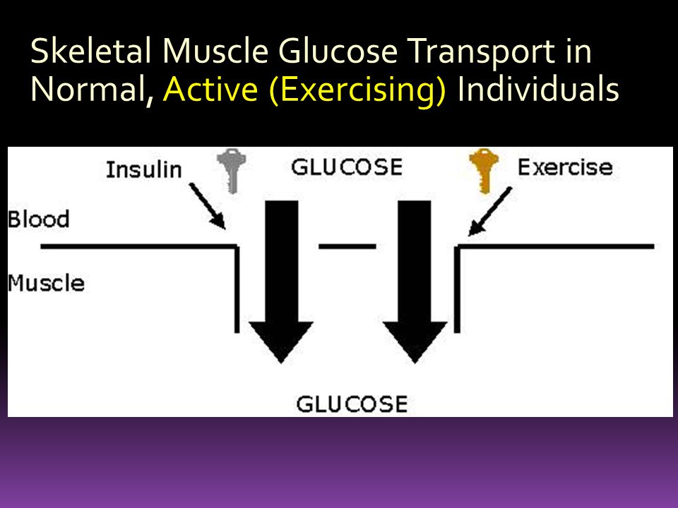 Skeletal Muscle Glucose Transport in Normal, Active (Exercising) Individuals