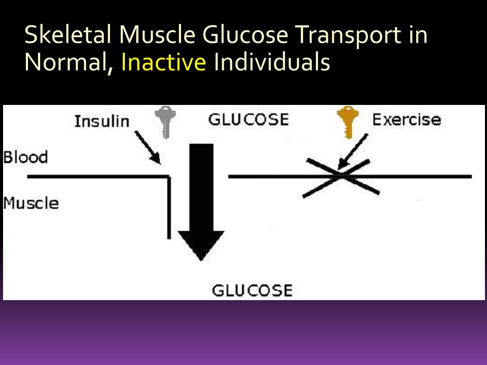 Skeletal Muscle Glucose Transport in Normal, Inactive Individuals