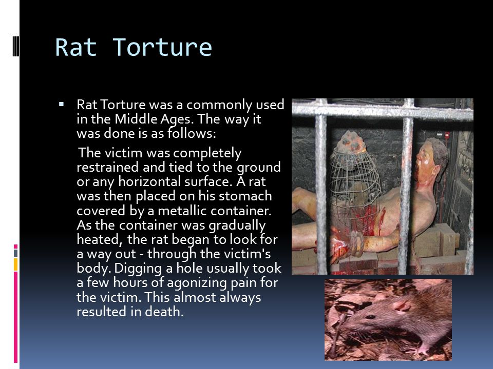 Rat Torture  Rat Torture was a commonly used in the Middle Ages.