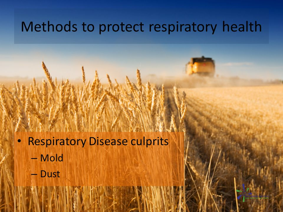 Methods to protect respiratory health Respiratory Disease culprits – Mold – Dust