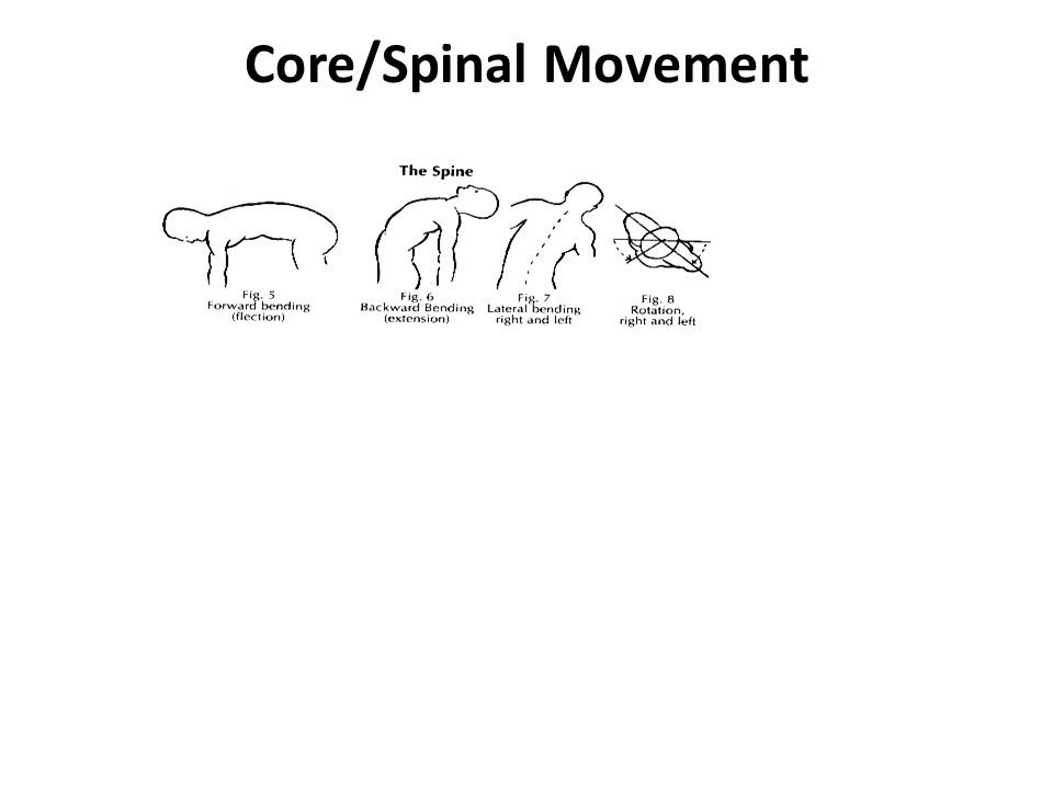 Core/Spinal Movement