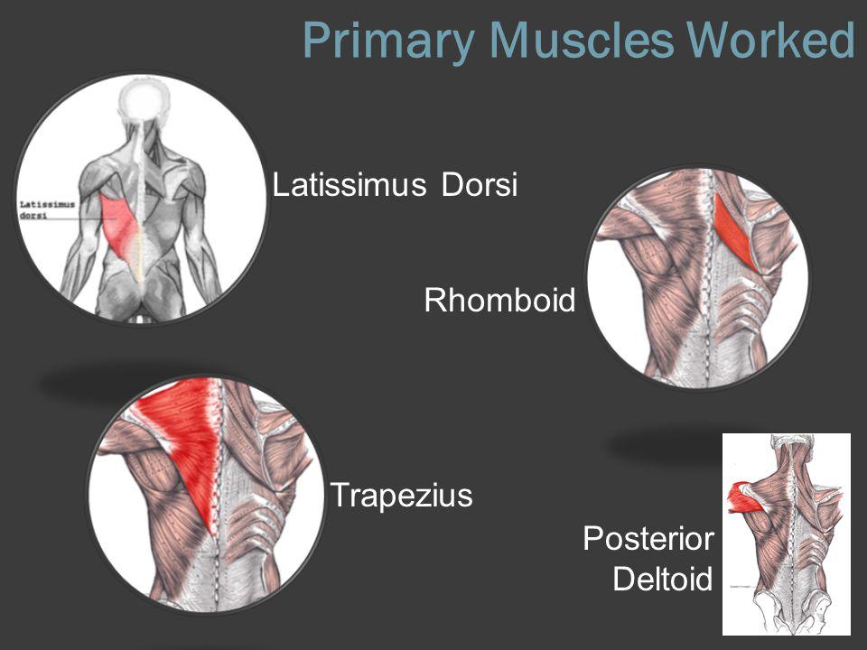 Primary Muscles Worked Latissimus Dorsi Rhomboid Trapezius Posterior Deltoid