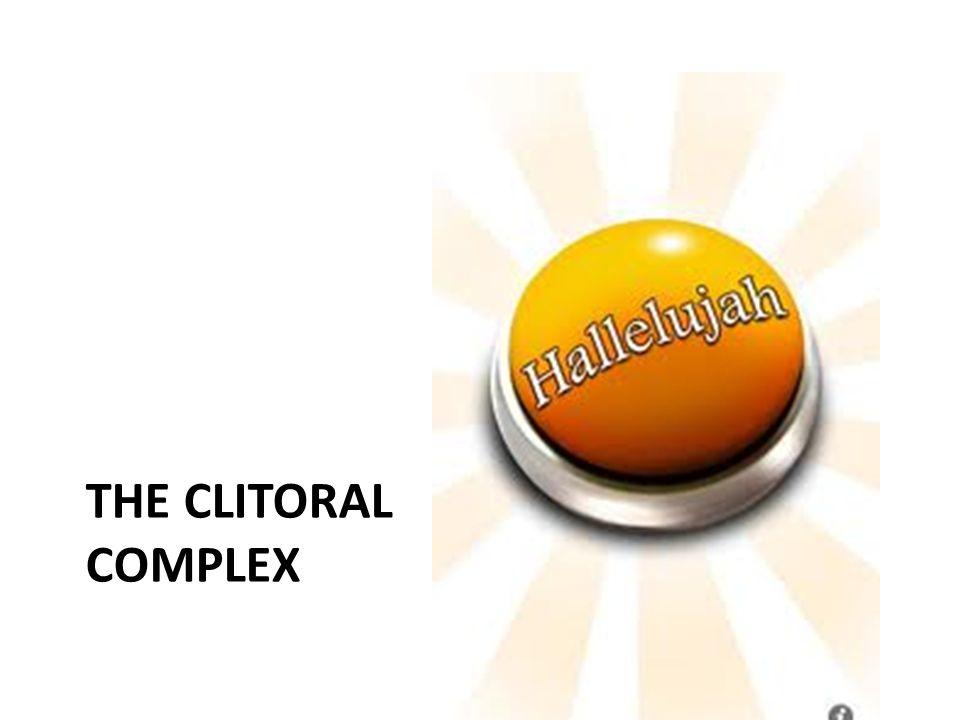 THE CLITORAL COMPLEX