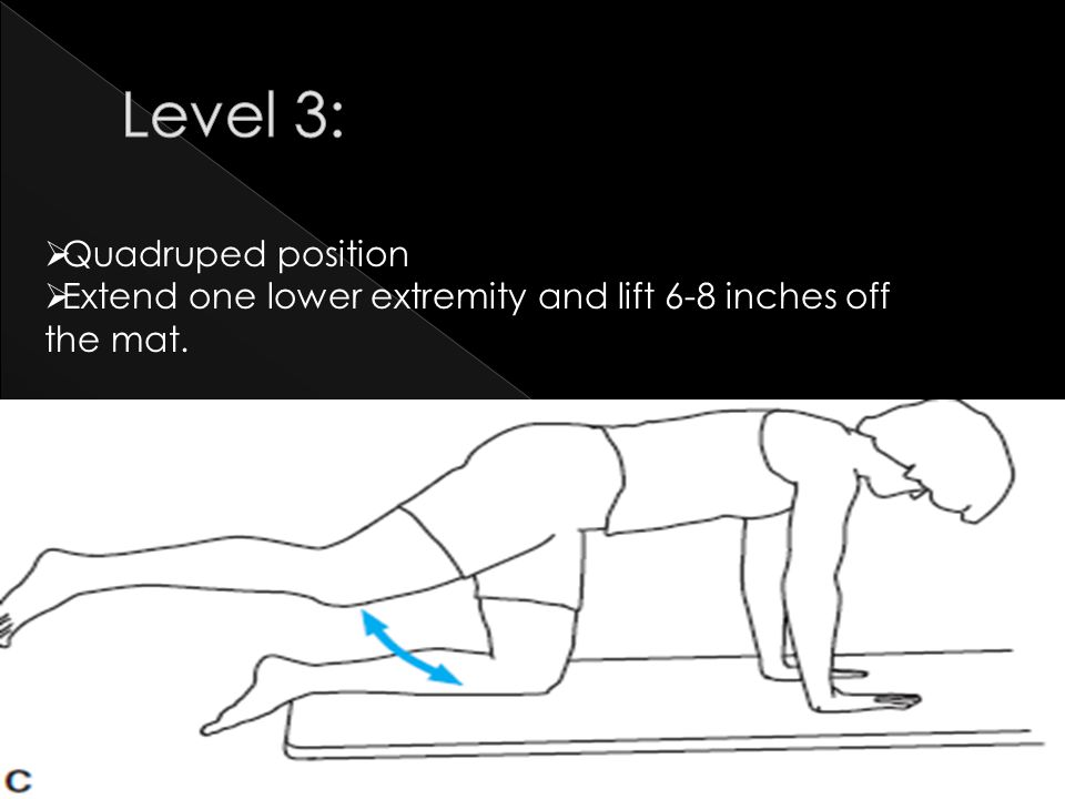  Quadruped position  Extend one lower extremity and lift 6-8 inches off the mat.