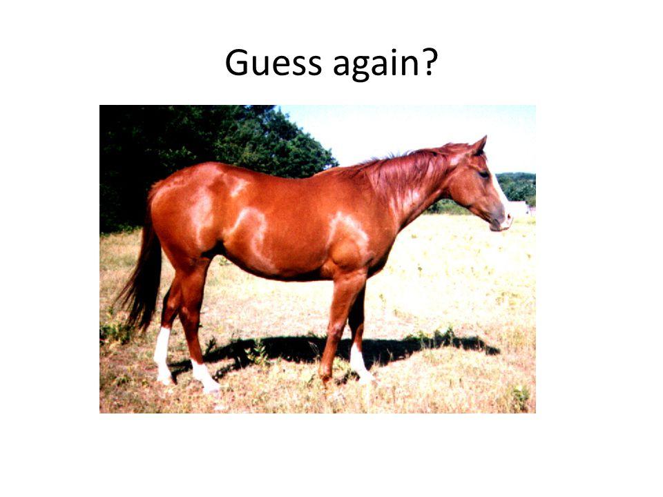 Guess again