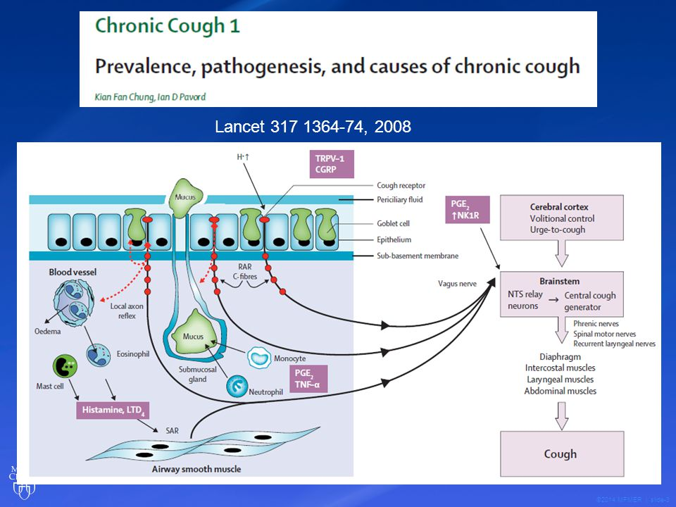 ©2014 MFMER | slide-24 Evaluation of Chronic Cough Exhaled Nitric Oxide Numerous biomarkers of inflammation that have been detected in exhaled breath Therapeutic Advances in Resp Disease 2007 1;5