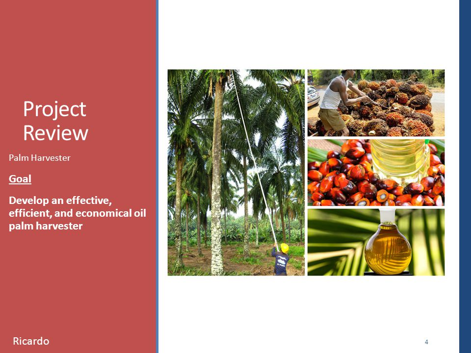 Project Review Palm Harvester Goal Develop an effective, efficient, and economical oil palm harvester 4 Ricardo