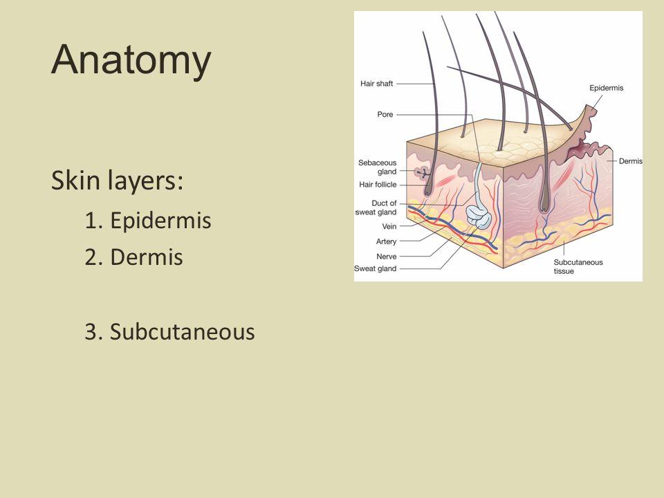 Anatomy Skin layers: 1. Epidermis 2. Dermis 3. Subcutaneous
