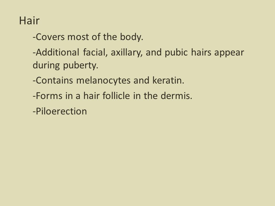 Hair -Covers most of the body. -Additional facial, axillary, and pubic hairs appear during puberty. -Contains melanocytes and keratin. -Forms in a hai