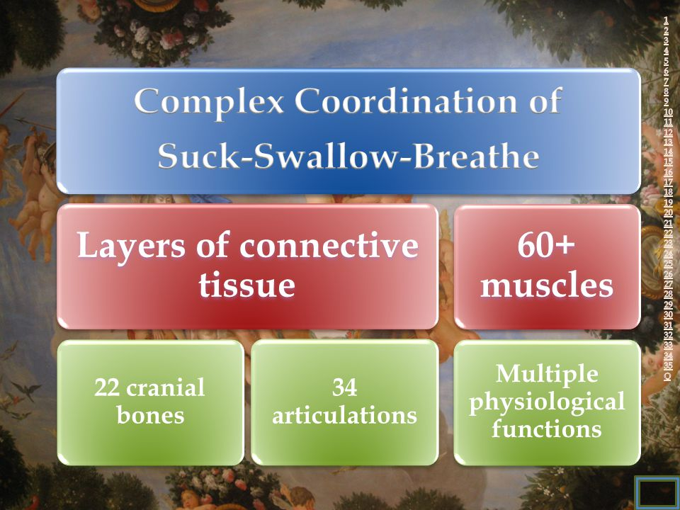 Layers of connective tissue 22 cranial bones 34 articulations 60+ muscles Multiple physiological functions