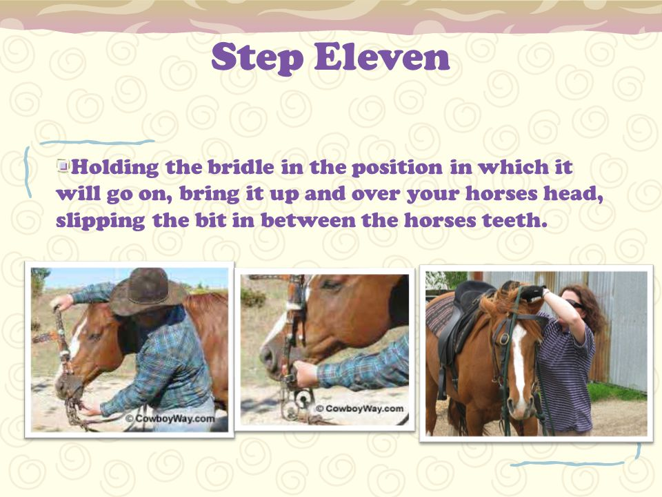 Step Eleven Holding the bridle in the position in which it will go on, bring it up and over your horses head, slipping the bit in between the horses teeth.
