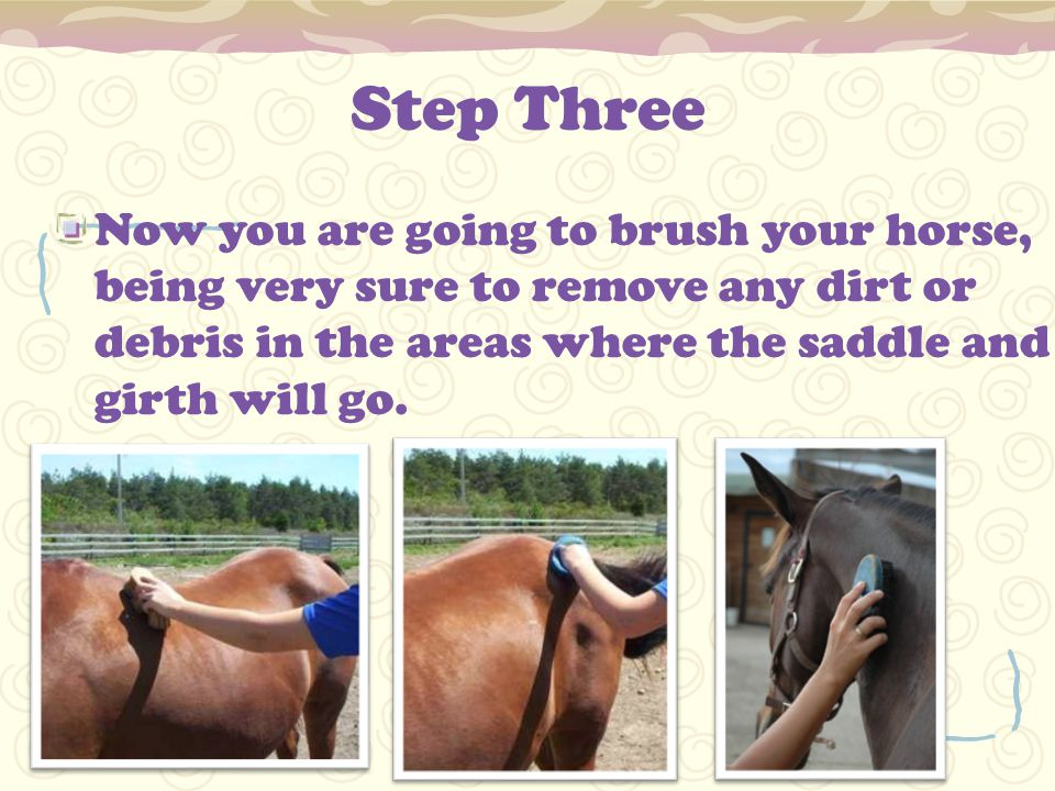 Step Three Now you are going to brush your horse, being very sure to remove any dirt or debris in the areas where the saddle and girth will go.