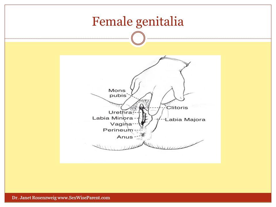 Female genitalia Dr. Janet Rosenzweig www.SexWiseParent.com