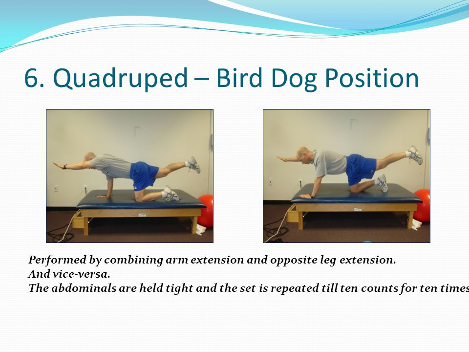 6. Quadruped – Bird Dog Position Performed by combining arm extension and opposite leg extension. And vice-versa. The abdominals are held tight and th