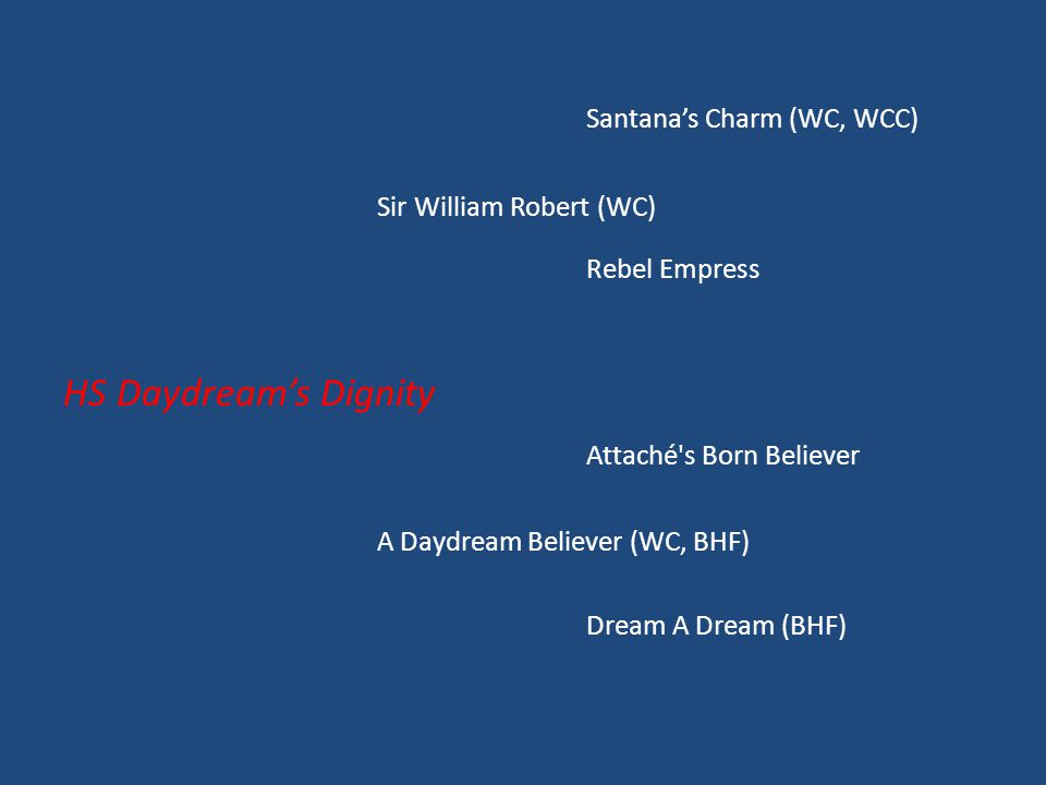 Santana's Charm (WC, WCC) Sir William Robert (WC) Rebel Empress HS Daydream's Dignity Attaché s Born Believer A Daydream Believer (WC, BHF) Dream A Dream (BHF)