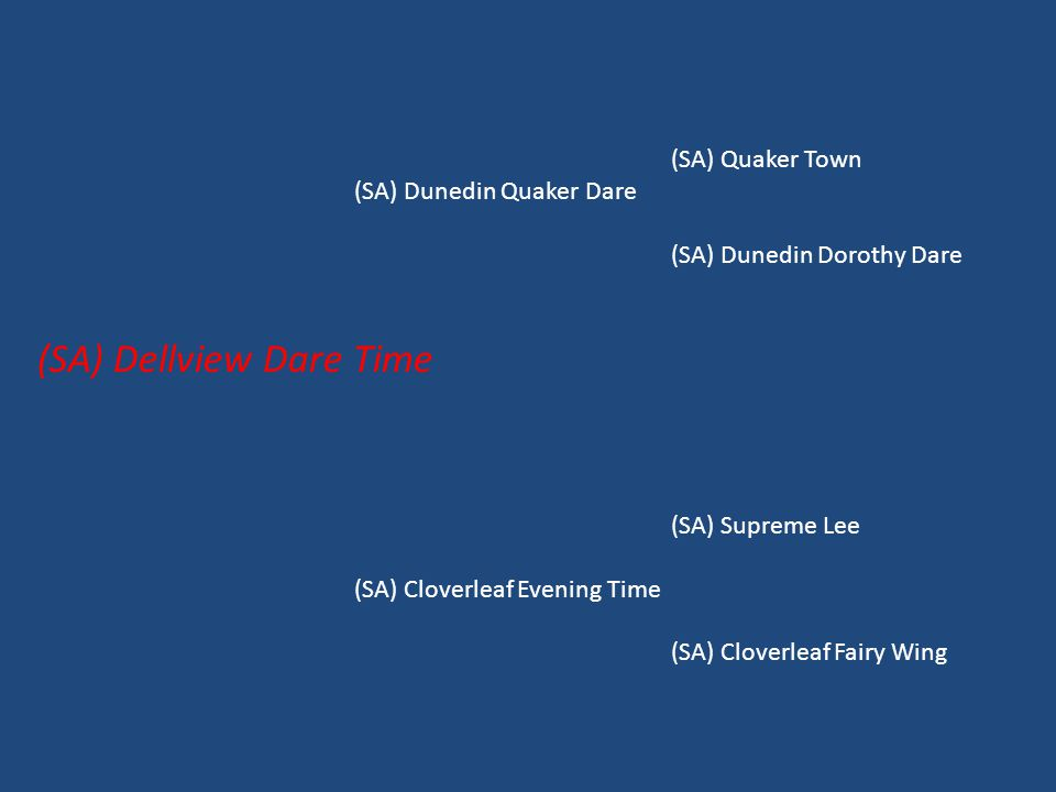 (SA) Quaker Town (SA) Dunedin Quaker Dare (SA) Dunedin Dorothy Dare (SA) Dellview Dare Time (SA) Supreme Lee (SA) Cloverleaf Evening Time (SA) Cloverleaf Fairy Wing