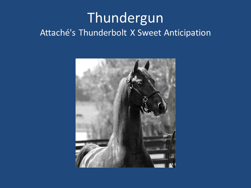 Thundergun Attaché s Thunderbolt X Sweet Anticipation