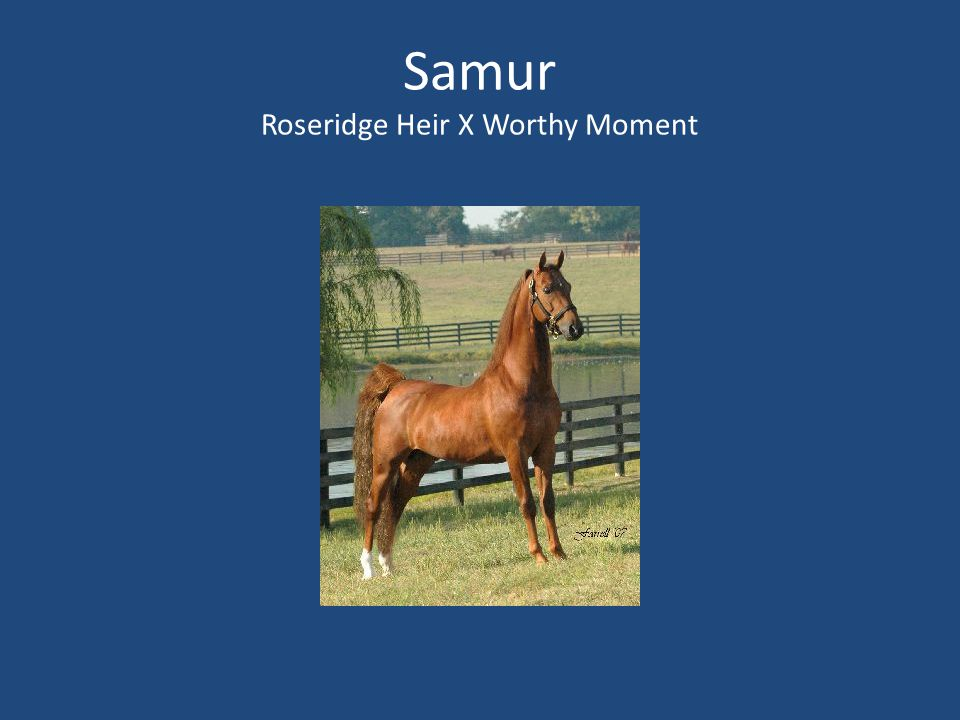 Samur Roseridge Heir X Worthy Moment