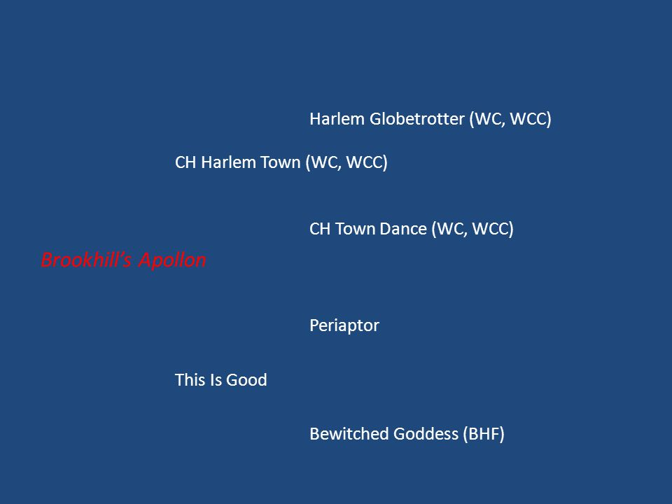 Harlem Globetrotter (WC, WCC) CH Harlem Town (WC, WCC) CH Town Dance (WC, WCC) Brookhill's Apollon Periaptor This Is Good Bewitched Goddess (BHF)