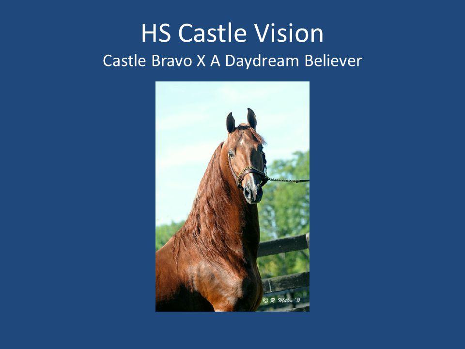 HS Castle Vision Castle Bravo X A Daydream Believer
