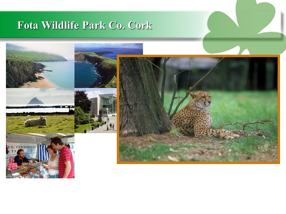 Fota Wildlife Park Co. Cork