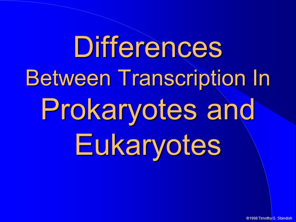 ©1998 Timothy G. Standish Differences Between Transcription In Prokaryotes and Eukaryotes
