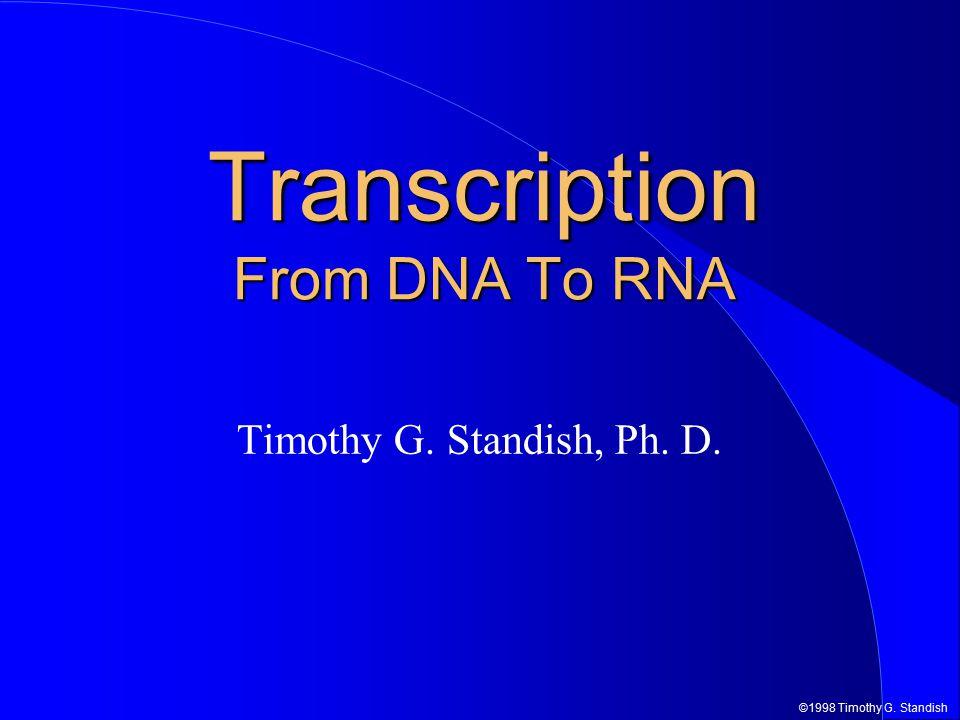 ©1998 Timothy G.Standish RNA Pol. 5' RNA Termination Rho Dependent Terminator  RNA Pol.