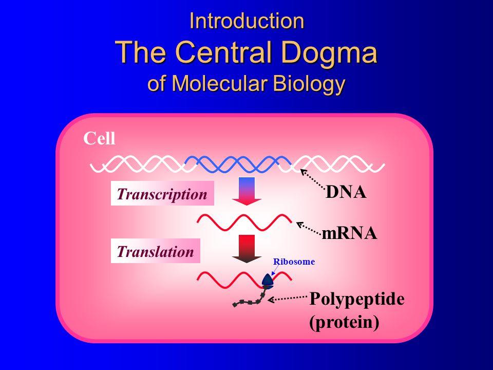 ©1998 Timothy G.Standish RNA Pol. 5' RNA Termination Rho Dependent Terminator  Help, Rho hit me.