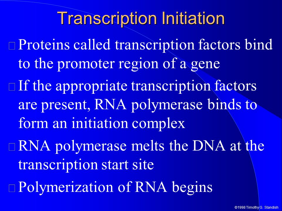 ©1998 Timothy G. Standish RNA Pol.Initiation Promoter RNA Pol. T. F. 5' RNA