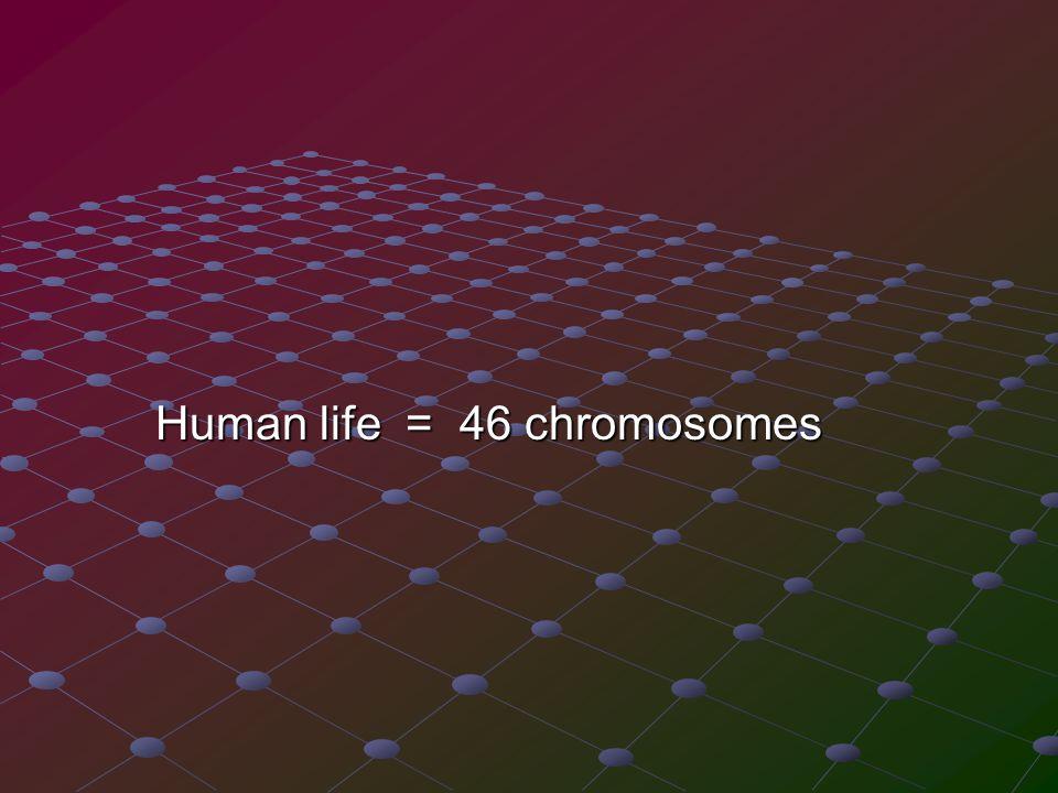 Human life = 46 chromosomes Human life = 46 chromosomes