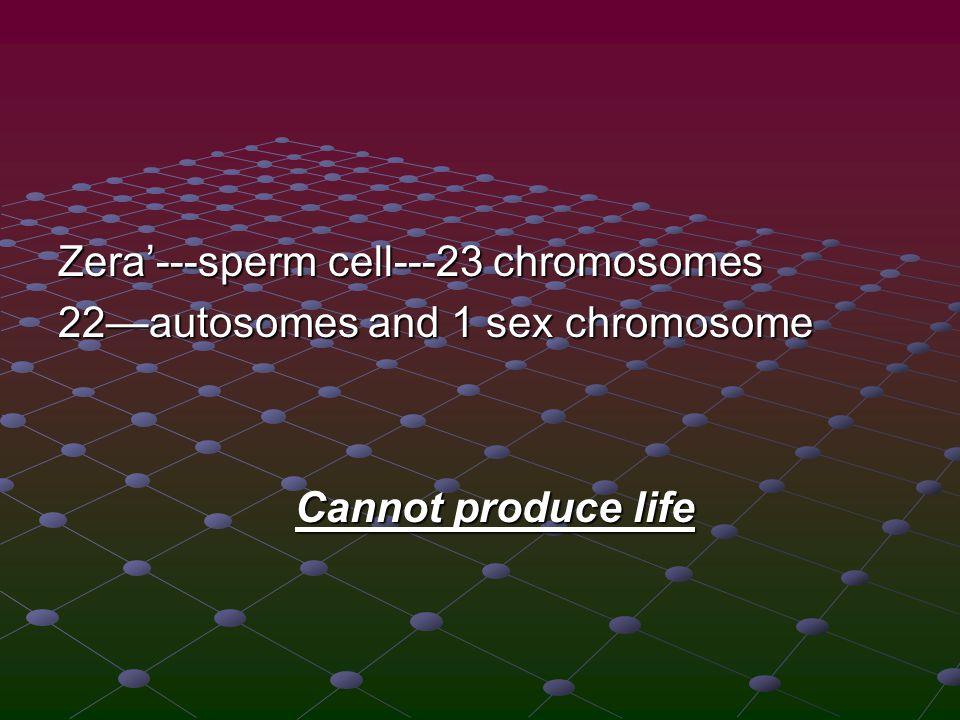Zera'---sperm cell---23 chromosomes 22—autosomes and 1 sex chromosome Cannot produce life Cannot produce life