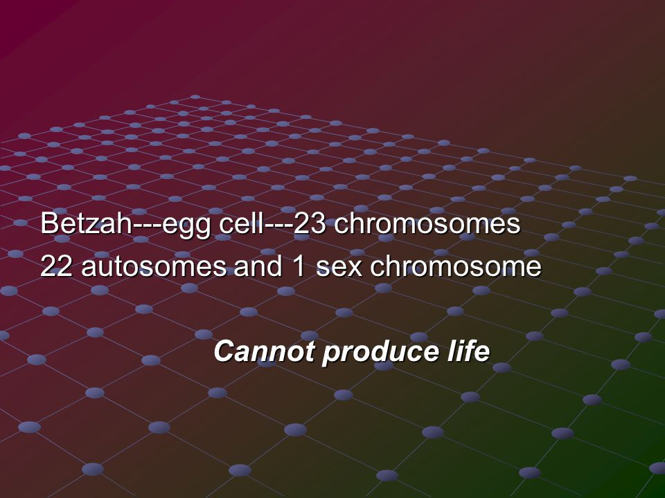 Betzah---egg cell---23 chromosomes 22 autosomes and 1 sex chromosome Cannot produce life Cannot produce life