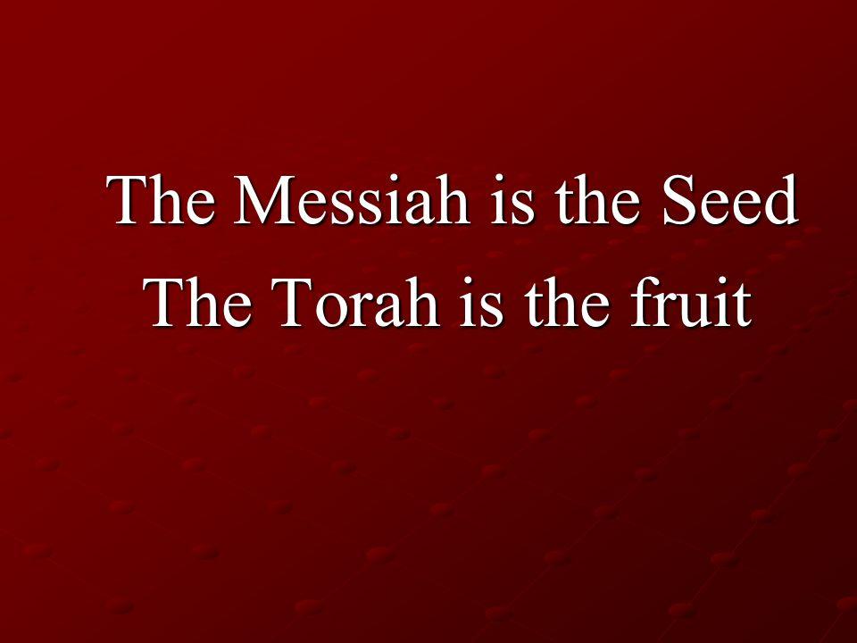 The Messiah is the Seed The Messiah is the Seed The Torah is the fruit The Torah is the fruit