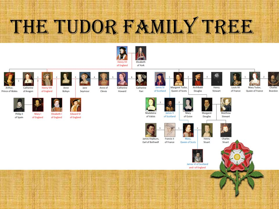 The Tudor Family Tree