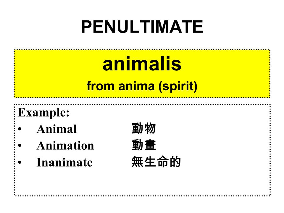 PENULTIMATE animalis from anima (spirit) Example: Animal 動物 Animation 動畫 Inanimate 無生命的