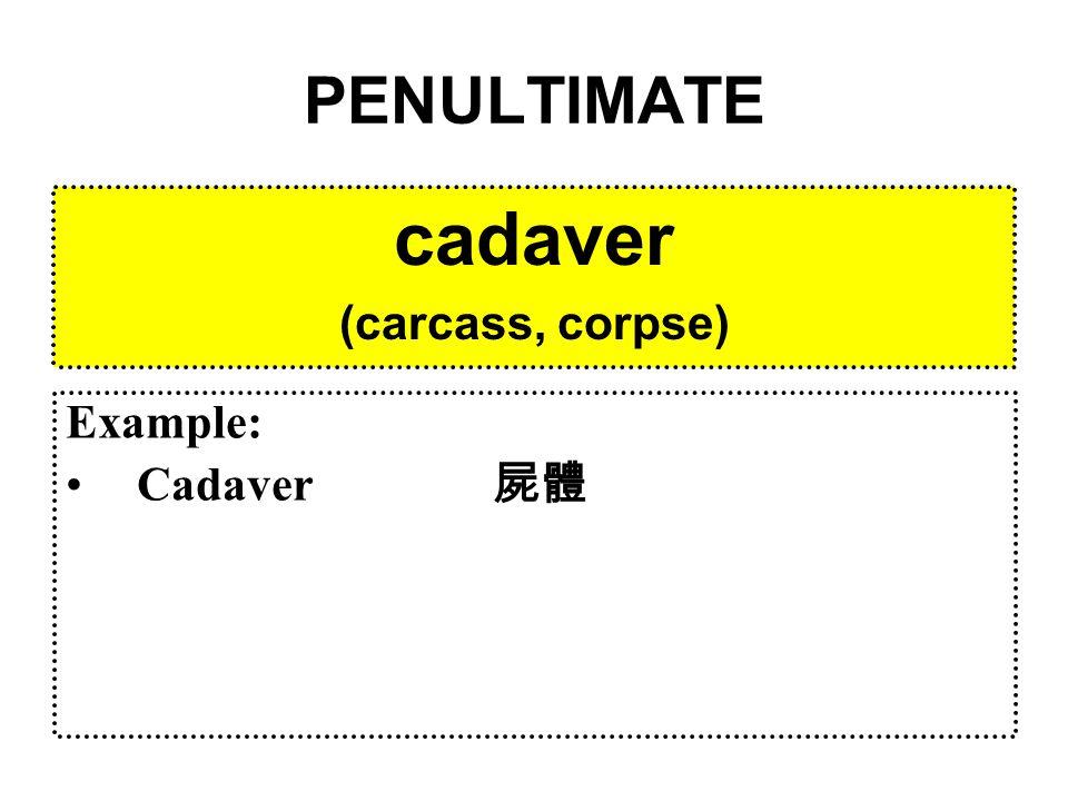 PENULTIMATE incumbit from incumbo (to lean / recline) Example: Incumbent 現任者