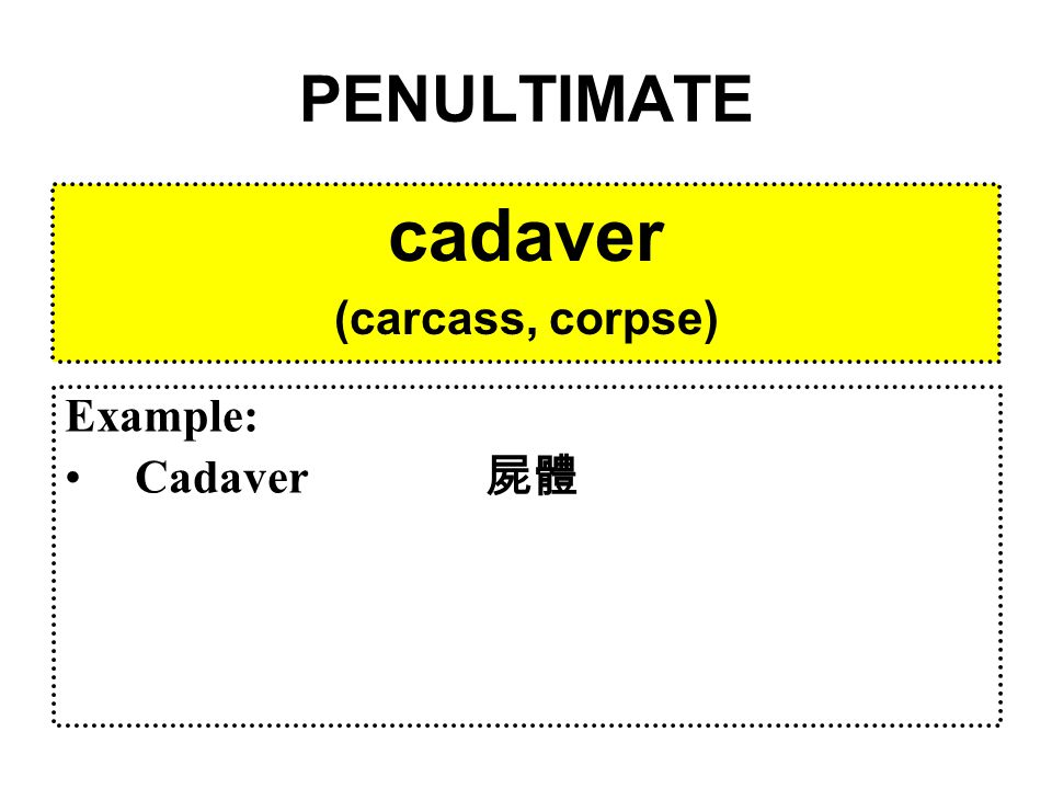 PENULTIMATE cadaver (carcass, corpse) Example: Cadaver 屍體
