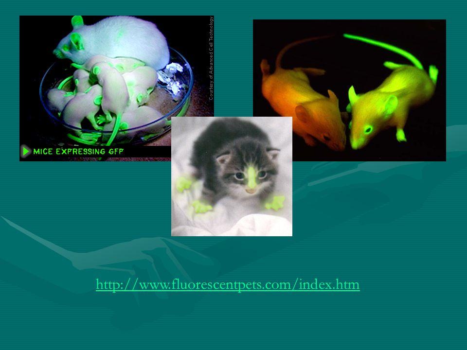 http://www.fluorescentpets.com/index.htm