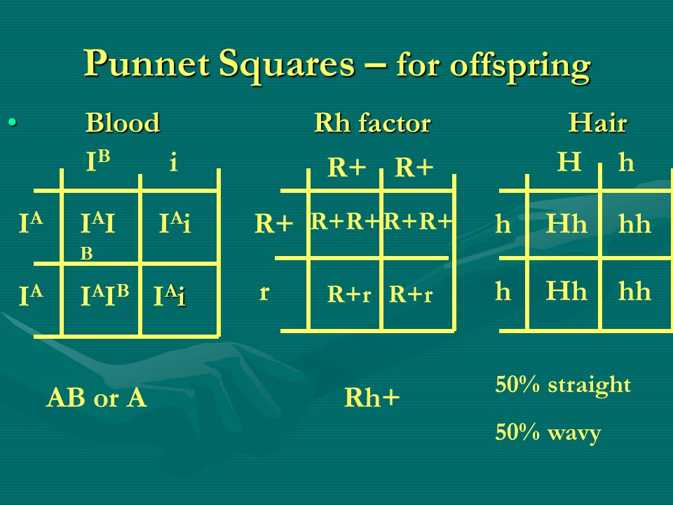 Punnet Squares – for offspring Blood Rh factor Hair Blood Rh factor Hair IBIB i IAIA IAIA IAIBIAIB IAiIAi IAIBIAIB AiIAiAiIAi R+ r R+R+ R+r Hh h h Hh